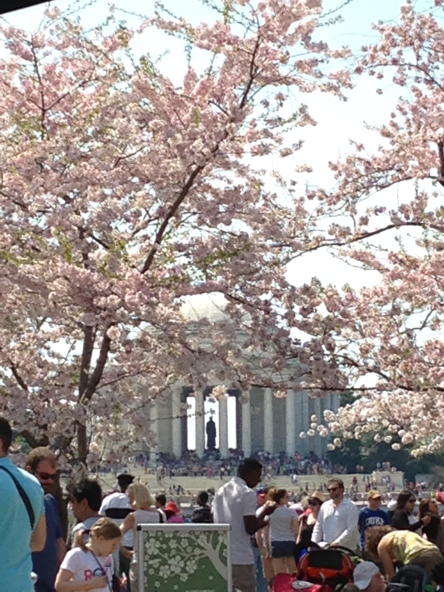 Jefferson through the blossoms's